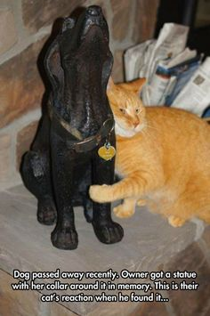 """""""Dog passed away recently. Owner got a statue with her collar around it in memory. This is their cat's reaction when he found it. I Love Cats, Crazy Cats, Cute Cats, Funny Cats, Weird Cats, Cat Fun, Animals And Pets, Funny Animals, Cute Animals"""