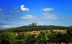 Castel del Monte Monument Valley, Vineyard, Nature, Travel, Outdoor, Italy, Outdoors, Naturaleza, Viajes