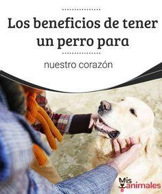 Los beneficios de tener un perro para nuestro corazón ¿Sabes por qué el hecho de tener un perro puede mejorar nuestra salud física y anímica? Te contamos los beneficios de tener un perro, ¡no te los pierdas! #beneficios #perro #corazón #salud