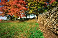Fall Colours  -- Kelowna  BC