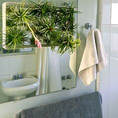 A sparse bathroom gets a dramatic upgrade with a wire frame stuffed with Tillandsia. #airplants