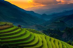 #Sunset of Rice Terrace @ Mu Cang aChai, Vietnam