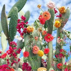 178 images about Cactus / Succulents on We Heart It Desert Flowers, Beautiful Flowers, Beautiful Moments, Cactus E Suculentas, Image Deco, Flower Aesthetic, Arte Floral, Cactus Flower, Cactus With Flowers