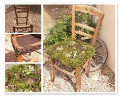 """A chair in the garden...""""Recovered a chair on the sidewalk, film geotextile, wire mesh...a little earth and succulents."""""""