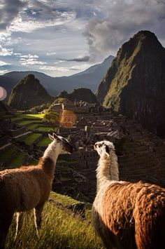 world energy grid machu picchu alpacas Oh The Places You'll Go, Places To Travel, Places To Visit, Alpacas, Peru Travel, Travel List, Hawaii Travel, Italy Travel, Paisajes