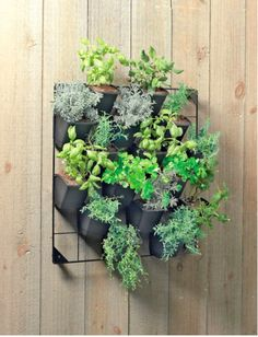 wall plant green painting