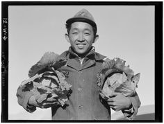 Richard Kobayashi holds a head of cabbage in each hand.    Image: by Ansel Adams at Manzanar / Library of Congress  Pictures of Daily Life of Japanese Internment at Manzanar Camp in 1943 and 1944
