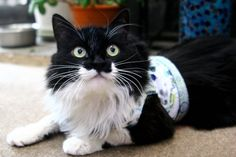 Homemade Cat Harness