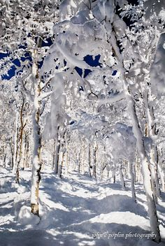 View of skiing the famed Champagne Powder at Steamboat Resort from John E Poplin Photography.