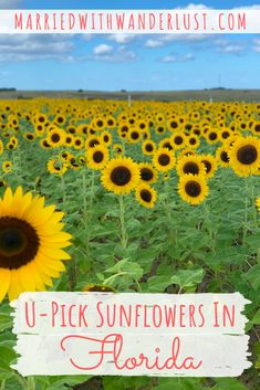 Southern Hill Farms in Clermont, Florida is a perfect spot for a day-trip if you're looking for a sunflower field in Florida. Florida Girl, Old Florida, Florida Travel, Travel Usa, Florida Trips, Florida Living, Florida Keys, Central Florida, Clearwater Florida