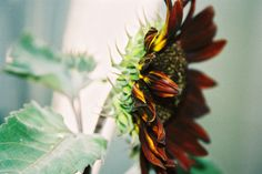 Black Sunflower Insects, Photographs, Bee, Fruit, Floral, Black, Black People, The Fruit, Fotografie