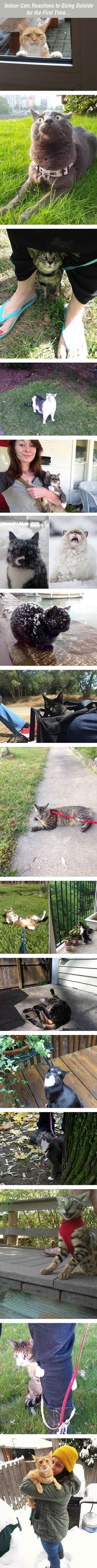 Indoor Cats Go Outside - Imgur