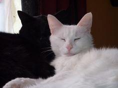 Chats de Francesca : des vérités sur les chats