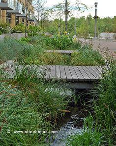 Bioswale for stormwater treatment at the Meriwether mixed use development in the South Waterfront District, Portland, Oregon