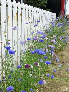 for the other side of the fence from the triangle - wild chicory and other wilds.