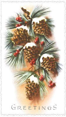 vintage Christmas card...Pinecones