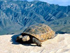 Conoce a los habitantes de #Coahuila Wildlife Nature, Fauna, Mother Earth, Turtle, History, Animals, Travel Plan, Beautiful Places, Bucket