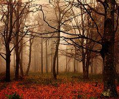 Beautiful fall trees!