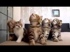 Kittens... Our Love - YouTube