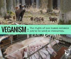 veganism: the right of animals not to be used as resources #vegan