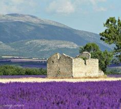 Provence ...