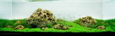 Aquascaping - the Iwagumi Style