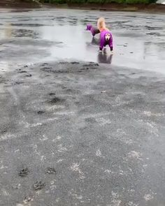 When life gives you rainy days, wear cute raincoats and jump in the puddles! Cute Funny Animals, Cute Baby Animals, Funny Cute, Animals And Pets, Cute Puppies, Cute Dogs, Cute Babies, Cute Animal Videos, Funny Animal Pictures
