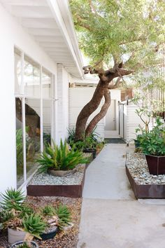 Desert plant landscaping at Miracle Manor in Desert Hot Springs, California | Photo: Natasha Lee