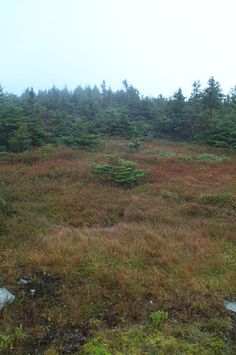 "On the upper slopes and summit ridge of Mount Mansfield Natural Area occur virgin, red spruce-balsam fir forest, extensive alpine tundra, and rare arctic flora not found elsewhere in the northeast.  The site includes ""The Chin,"" the highest peak in Vermont and the 600-foot cliffs of scenic and historic ""Smuggler's Notch.""  Location:Chittenden County, VT   													; Lamoille   														County, VT"
