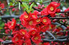 Me encantan ver los árboles en flor