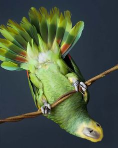Read all about #AmazonParrotDay in our blog.