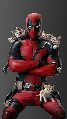 I want this to be Deadpool two. Just Deadpool chasing a bunch of cats and trying not to lose/kill them. I miss these days. Deadpool Y Spiderman, Deadpool Love, Deadpool Funny, Deadpool Quotes, Deadpool 2016, Deadpool Symbol, Deadpool Stuff, Deadpool Wallpaper, Marvel Wallpaper