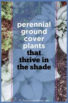 Plant these shade-loving #perennial ground cover plants under bushes and trees to help prevent weeds from growing and add some beautiful flowers to your garden.