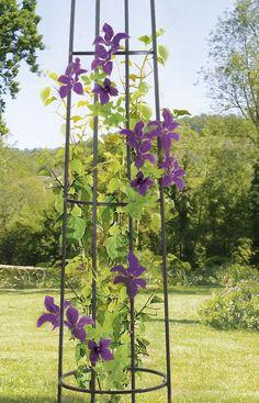 Support de plantes grimpantes greencable corfil green - Tuteur pour plante grimpante ...