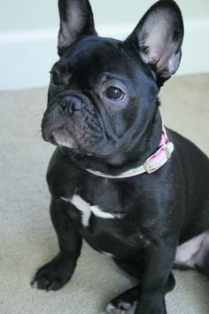 French BullDog Jewelry for Dog Lovers www.Etsy.com/Shop/TINYBLING