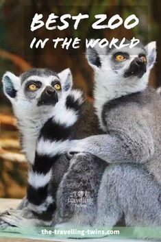 The Best Zoo in the World – The Travelling Twins Dallas Zoo, Houston Zoo, Wellington Zoo, Columbus Zoo, Toronto Zoo, Philadelphia Zoo, Zoological Garden, Chester Zoo, Travel General