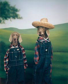 7) Starts with an F    - Farmer dogs  --William Wegman, Farmer and Son, 1994/2009