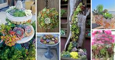 If there's one fast growing trend in plant arrangements, it's the world of succulent gardens. Check out the best outdoor design ideas here.