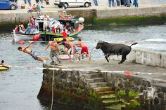 People flee the bull in a bullfight (tourada a corda) at Porto Martins. Terceira, Azores islands, Portugal