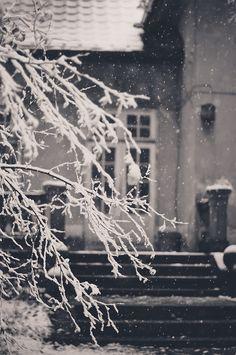 snowy - lilacsunandsea