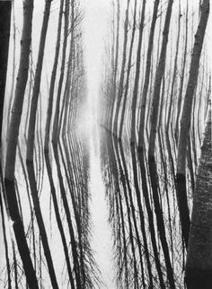 Harold Miller - Winter reflection, Italy, S) Fine Art Photo, Photo Art, Ombres Portées, The Doors Of Perception, Black And White Pictures, Tree Of Life, Textures Patterns, Nature Photography, White Photography
