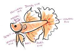 BETTA BASICS - Introduction to Bettafish Care