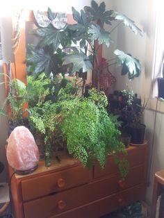 Bohemian Homes: Salt lamp and houseplants