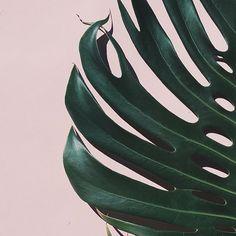 #PlantsOnPink by @thehonestjones