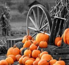 Contrast Photography - This image has only one colour showing which is the orange of te punkins.