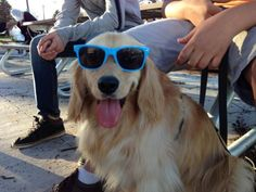 Just too damn cool. Click to view: 25 Animals Who Are Stoked For Summer!