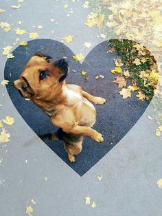 Tofi 💝 our dog
