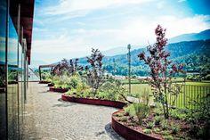 Dachgarten am Bürogebäude #garden #greenbuilding #office Innsbruck, Soho, Office, Gallery, Plants, Projects, Gardening, Plant, Planting