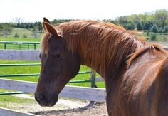 Photo of therapy horse by Julia Arnold.