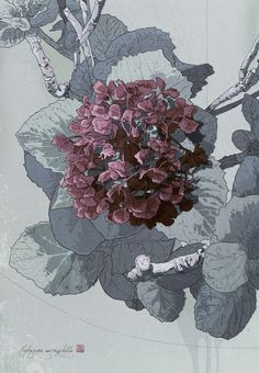 Hydrangea botanical by SH404. Contemporary